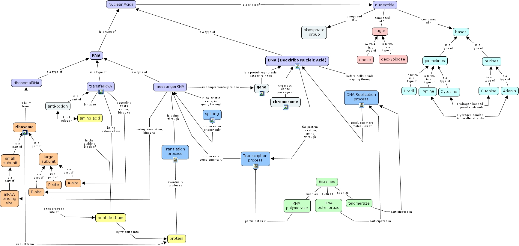 protein synthesis concept map with Dna 20cmap on Simple Protein Concept Map Biology additionally Central Dogma in addition Selective Breeding Flowchart further 13a  20Catecholamine 20Synthesis together with 2197 cotranslational protein labeling.
