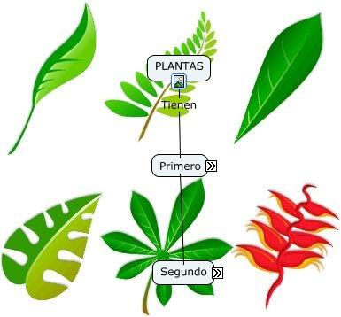 Anatomia de la planta