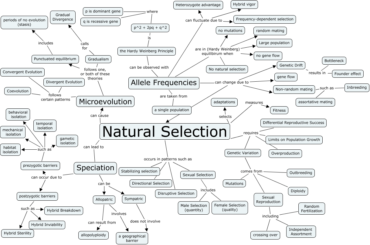 Concept Map Natural Selection