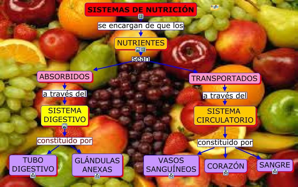 SISTEMAS DE NUTRICIÓN