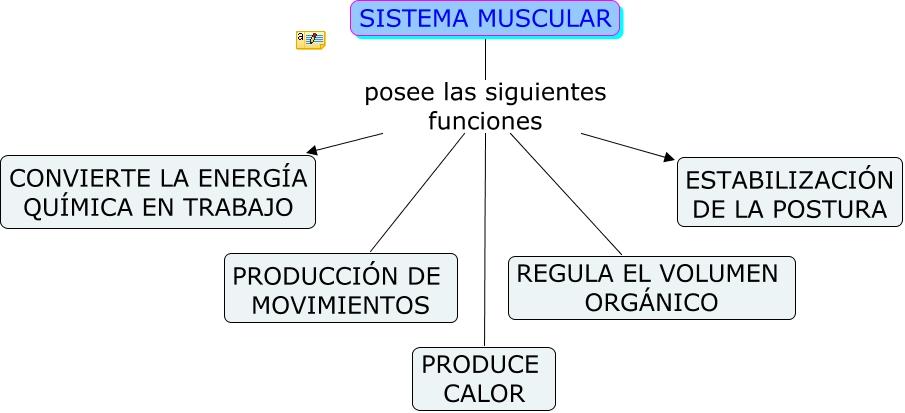 FUNCION DEL SISTEMA MUSCULAR