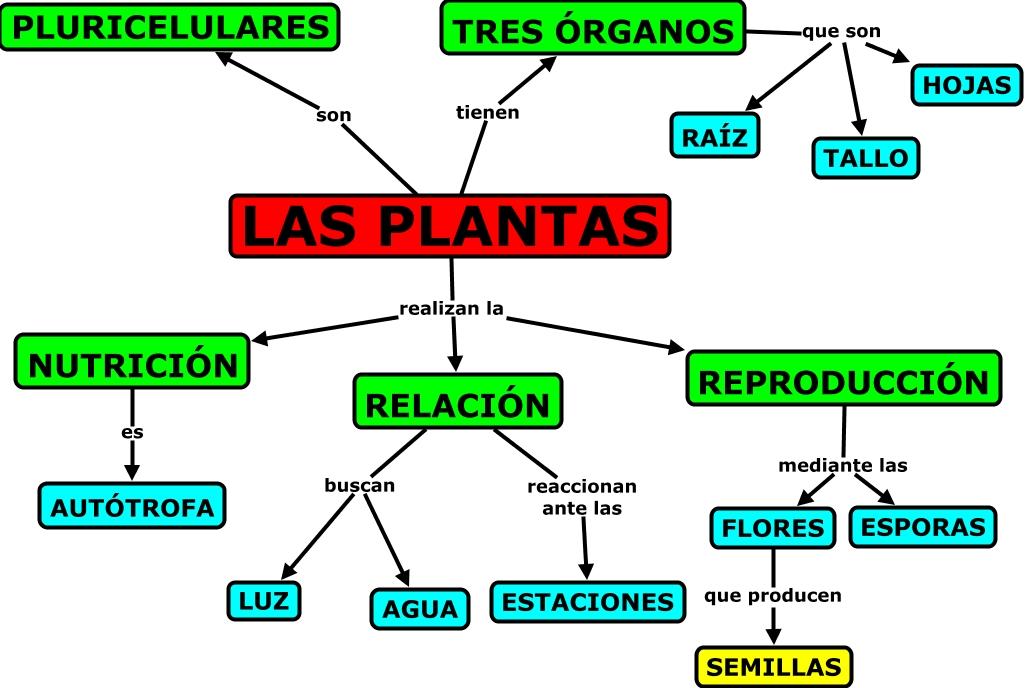 Plantas for Funcion de las plantas ornamentales