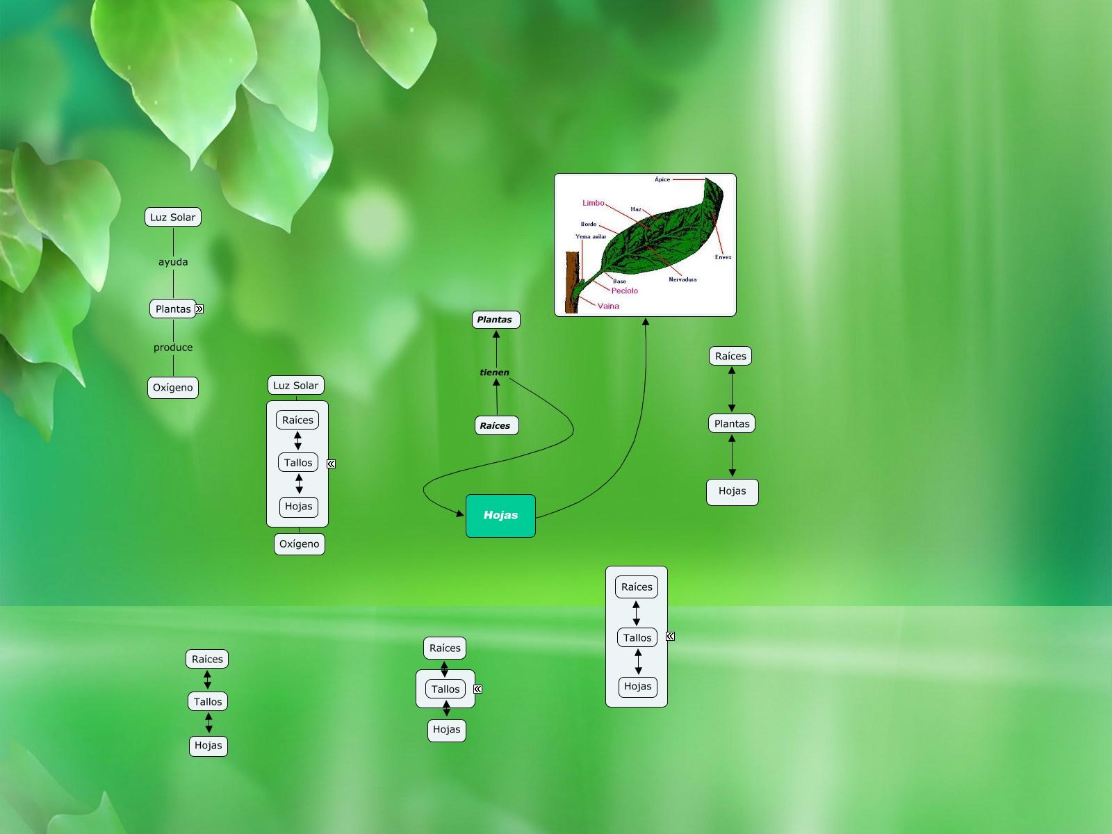 Anatomía de una Planta_Espanhol_Modelo disponível no Suporte on-line