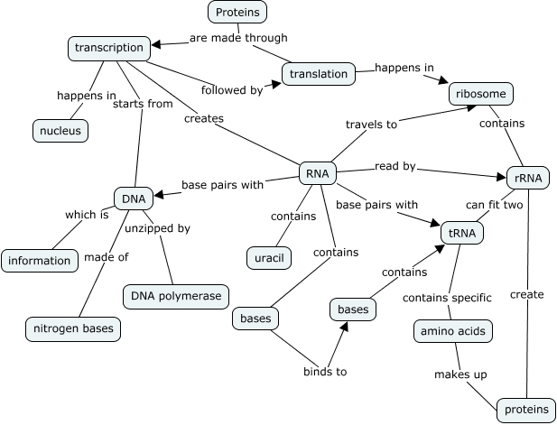 Proteins Concept Map.Khai Hoang Period 5 Row 3 Protein Synthesis Concept Map