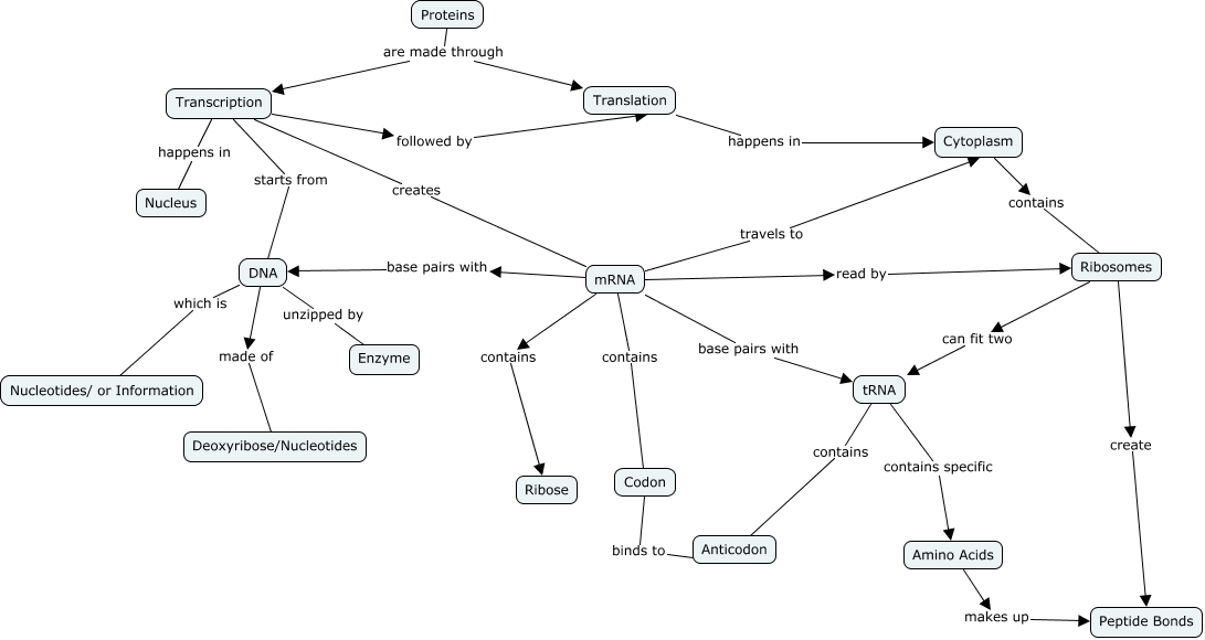 Protein Synthesis Concept Map How Are Proteins Made